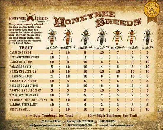 Bee Breeds